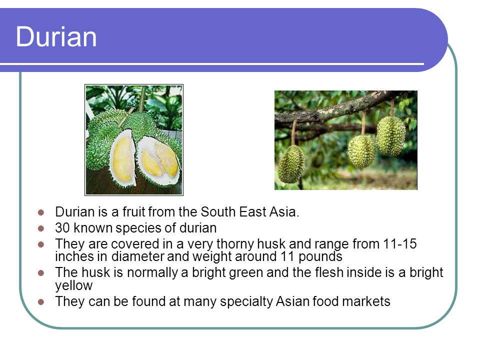 Durian Durian is a fruit from the South East Asia.