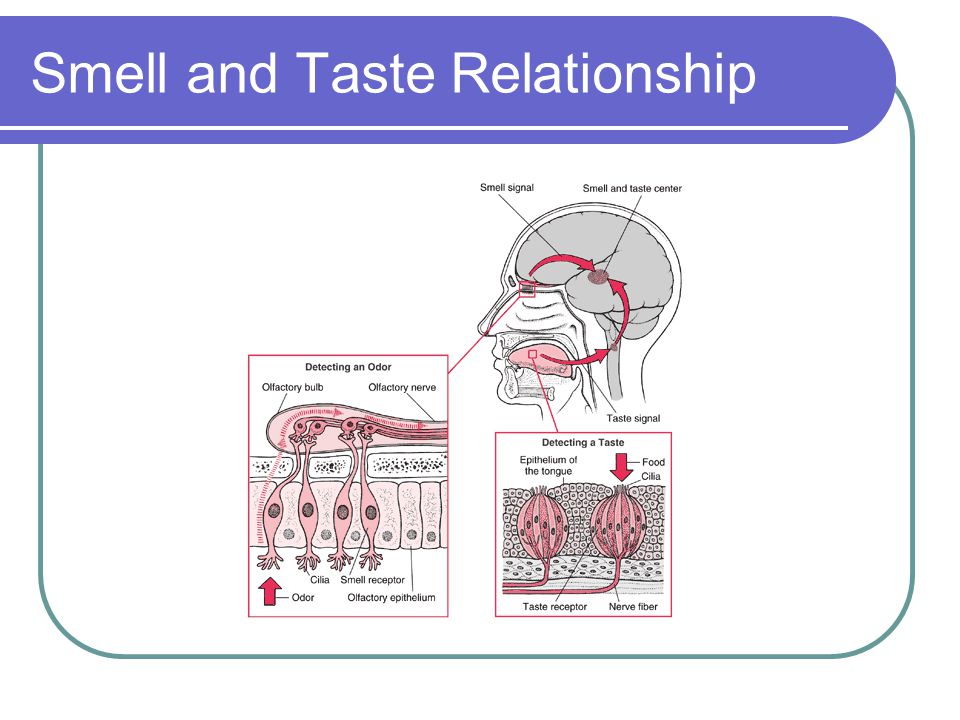 Smell and Taste Relationship
