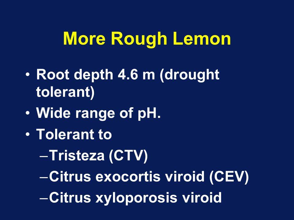 More Rough Lemon Root depth 4.6 m (drought tolerant) Wide range of pH. Tolerant to –Tristeza (CTV) –Citrus exocortis viroid (CEV) –Citrus xyloporosis