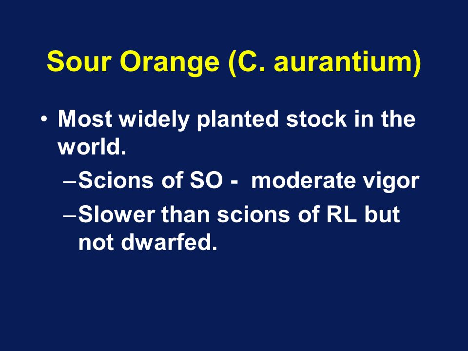 Sour Orange (C. aurantium) Most widely planted stock in the world. –Scions of SO - moderate vigor –Slower than scions of RL but not dwarfed.