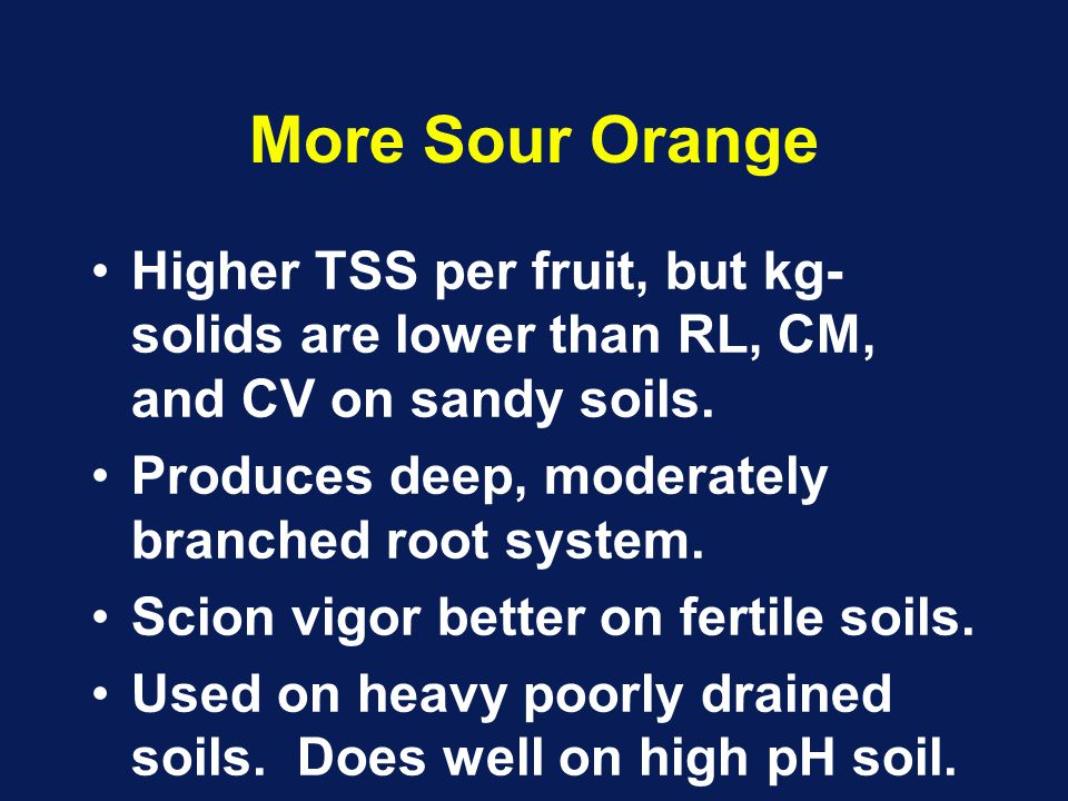 More Sour Orange Higher TSS per fruit, but kg- solids are lower than RL, CM, and CV on sandy soils.