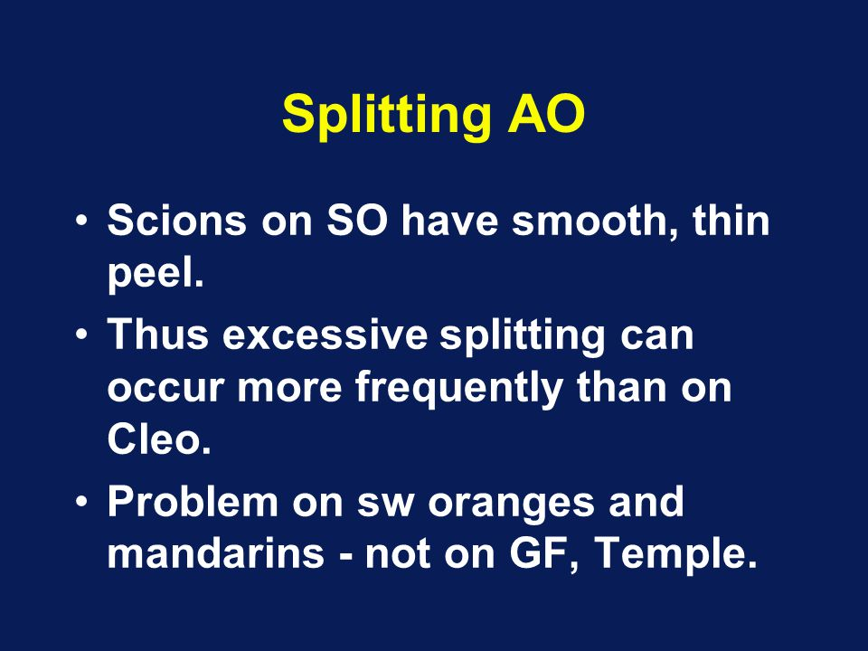 Splitting AO Scions on SO have smooth, thin peel.