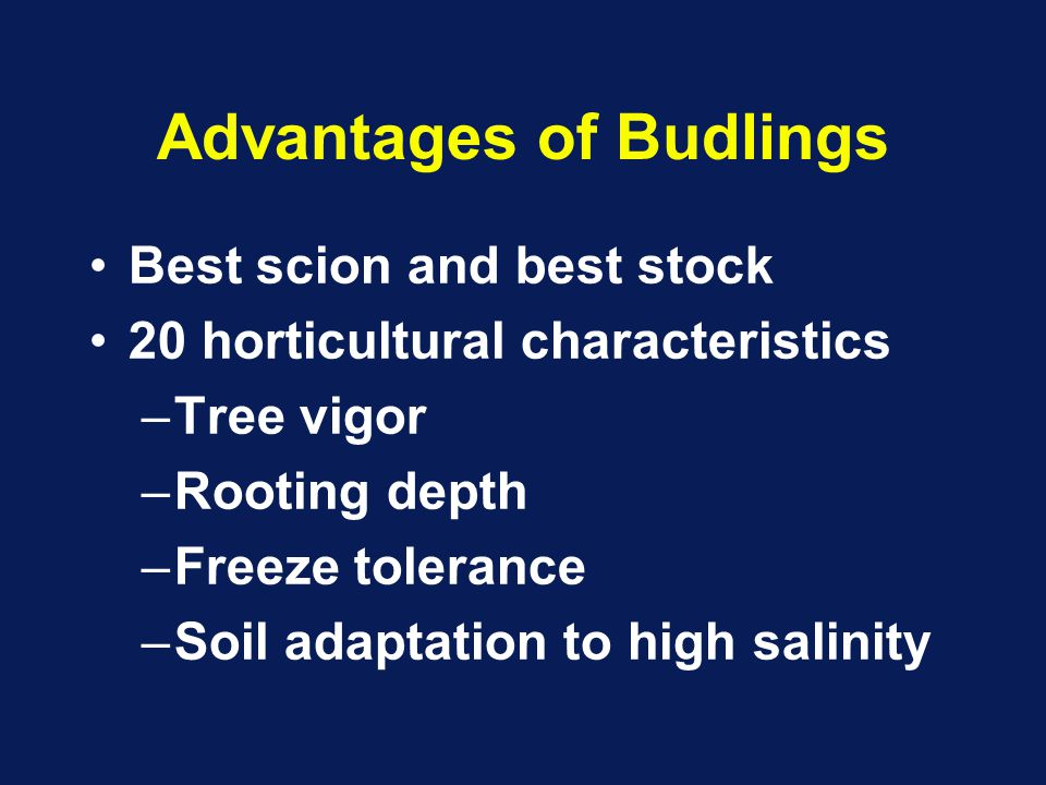 Advantages of Budlings Best scion and best stock 20 horticultural characteristics –Tree vigor –Rooting depth –Freeze tolerance –Soil adaptation to high salinity