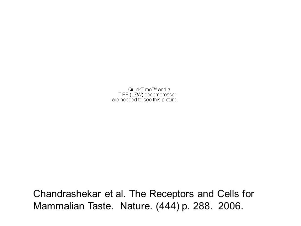 Chandrashekar et al. The Receptors and Cells for Mammalian Taste. Nature. (444) p. 288. 2006.