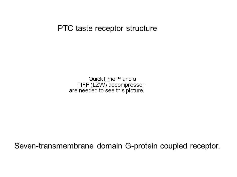 PTC taste receptor structure Seven-transmembrane domain G-protein coupled receptor.