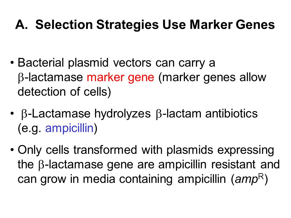 A. Selection Strategies Use Marker Genes Bacterial plasmid vectors can carry a  -lactamase marker gene (marker genes allow detection of cells)  -Lac