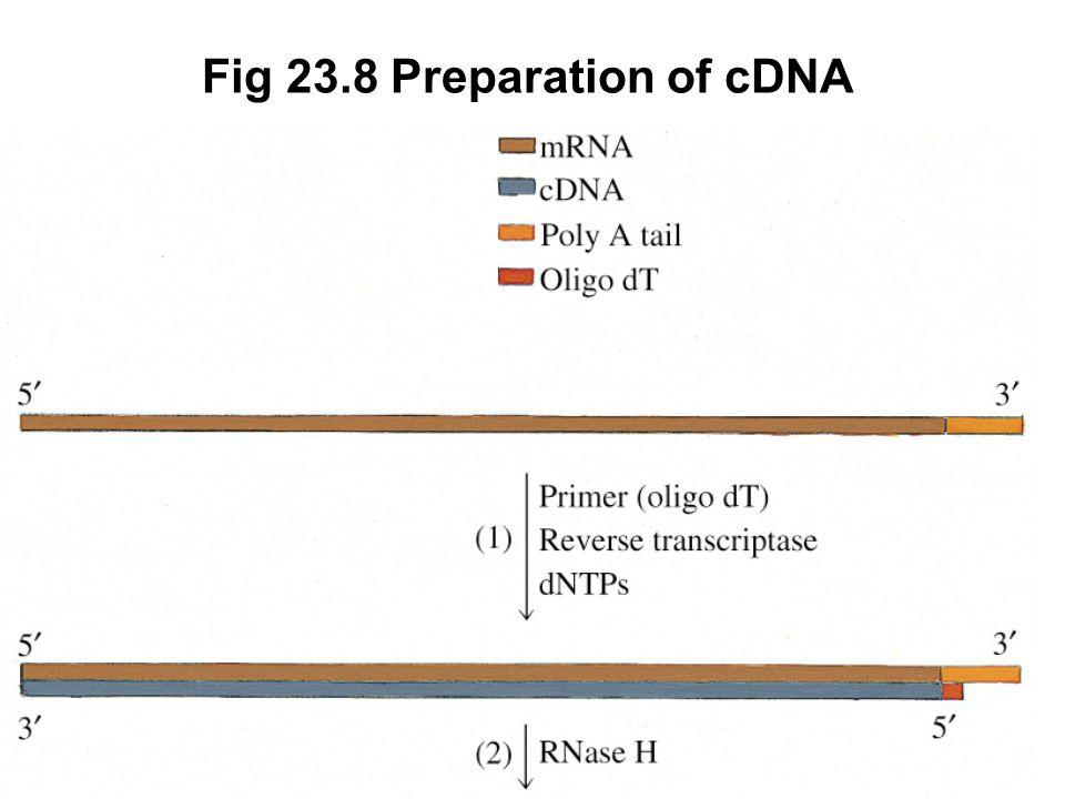 Fig 23.8 Preparation of cDNA