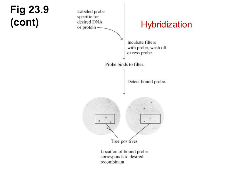 Fig 23.9 (cont) Hybridization