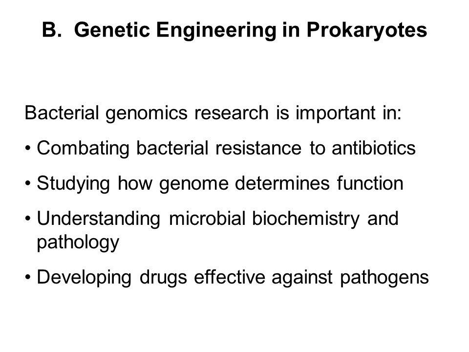 B. Genetic Engineering in Prokaryotes Bacterial genomics research is important in: Combating bacterial resistance to antibiotics Studying how genome d