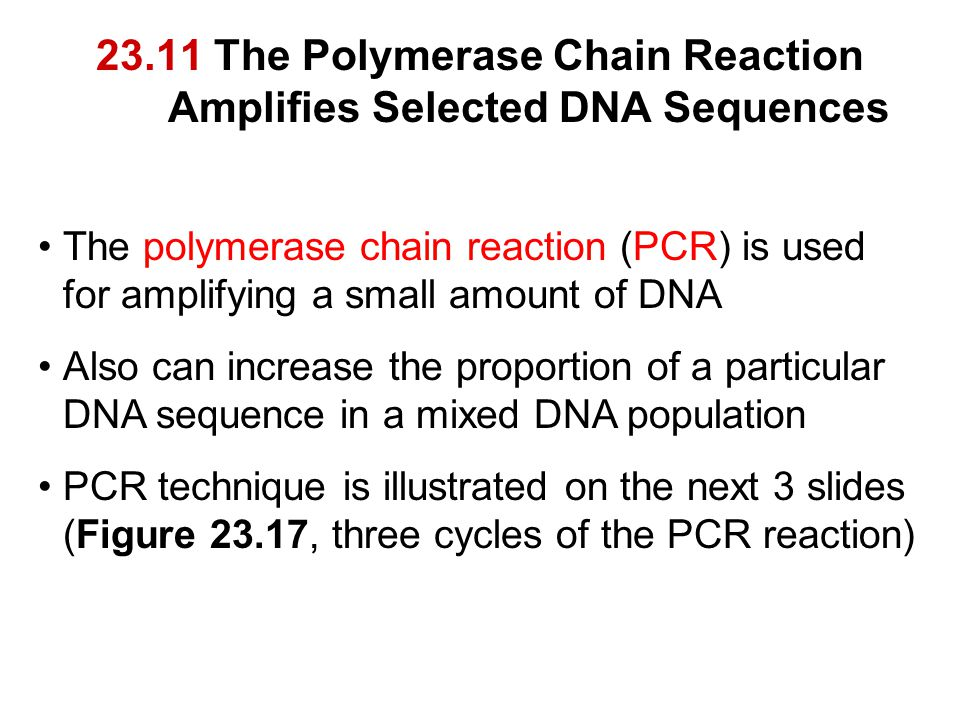 23.11 The Polymerase Chain Reaction Amplifies Selected DNA Sequences The polymerase chain reaction (PCR) is used for amplifying a small amount of DNA