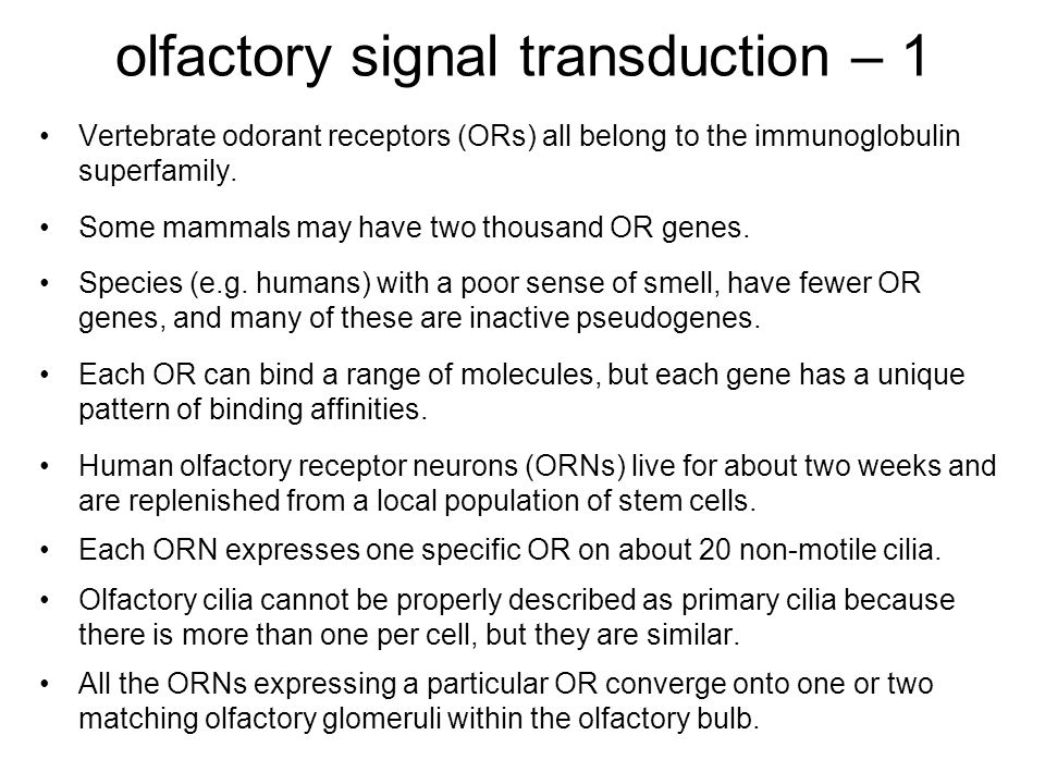 olfactory signal transduction – 1 Vertebrate odorant receptors (ORs) all belong to the immunoglobulin superfamily.