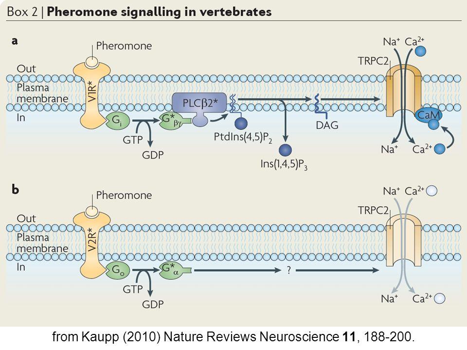 from Kaupp (2010) Nature Reviews Neuroscience 11, 188-200.