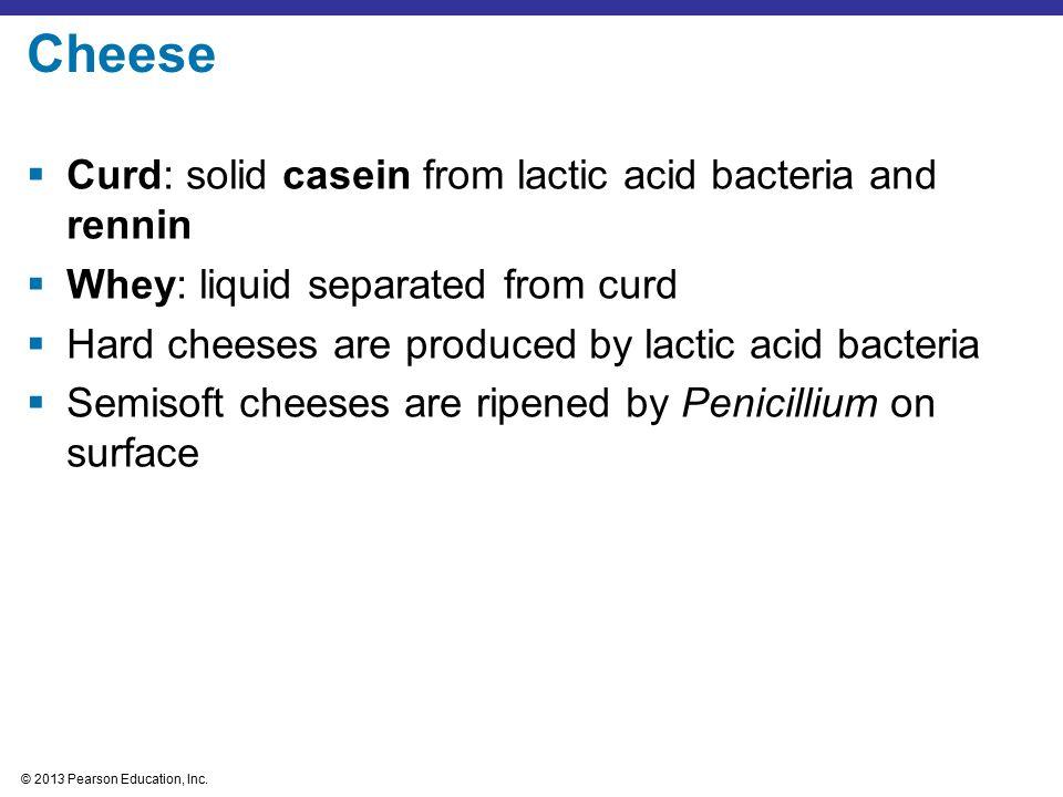 © 2013 Pearson Education, Inc.Figure 28.8 Making cheddar cheese.