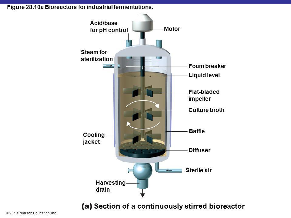 © 2013 Pearson Education, Inc.Figure 28.10b Bioreactors for industrial fermentations.