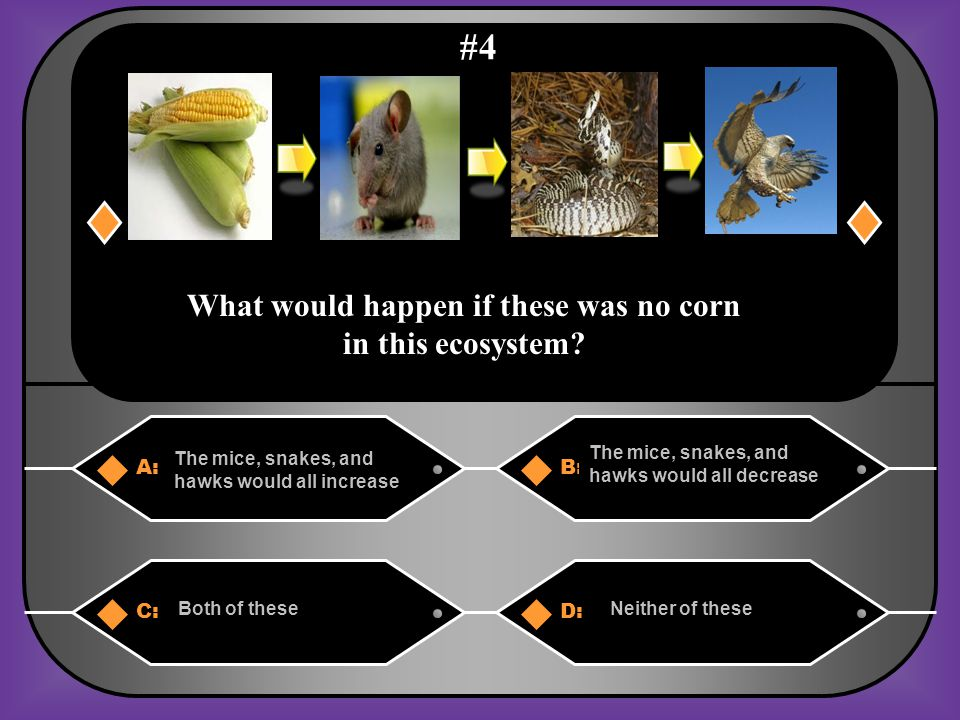 A. The hawks would decrease, the mice would increase, & the corn would decrease