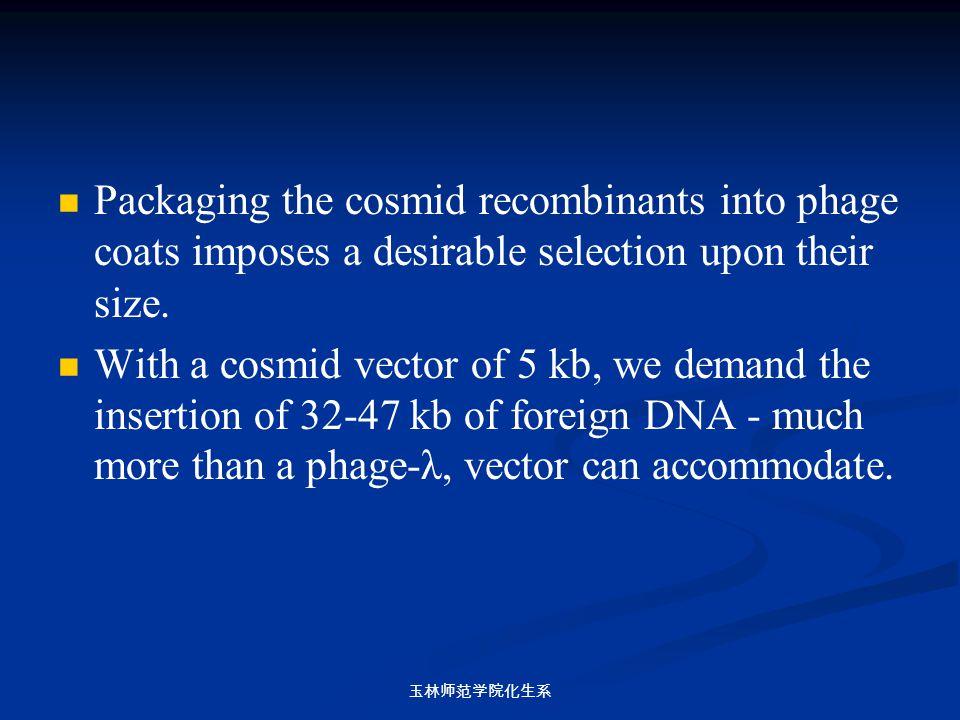 玉林师范学院化生系 Packaging the cosmid recombinants into phage coats imposes a desirable selection upon their size. With a cosmid vector of 5 kb, we demand th