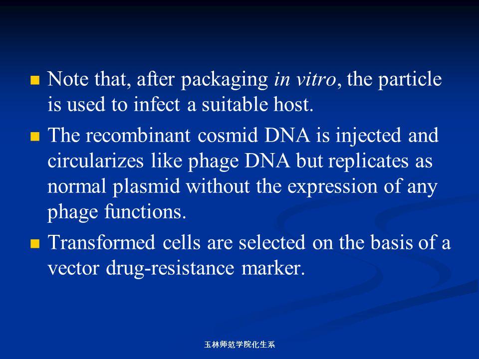 玉林师范学院化生系 Note that, after packaging in vitro, the particle is used to infect a suitable host. The recombinant cosmid DNA is injected and circularizes