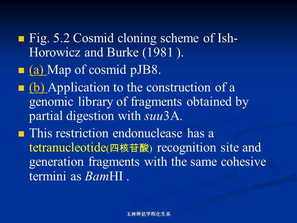 玉林师范学院化生系 Fig. 5.2 Cosmid cloning scheme of Ish- Horowicz and Burke (1981 ). (a) Map of cosmid pJB8. (a) (b) Application to the construction of a geno