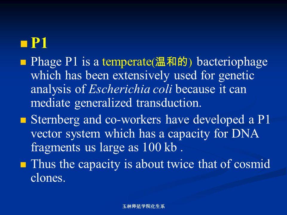 玉林师范学院化生系 P1 Phage P1 is a temperate ( 温和的 ) bacteriophage which has been extensively used for genetic analysis of Escherichia coli because it can med