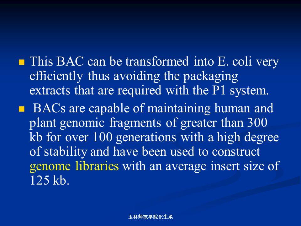 玉林师范学院化生系 This BAC can be transformed into E. coli very efficiently thus avoiding the packaging extracts that are required with the P1 system. BACs ar