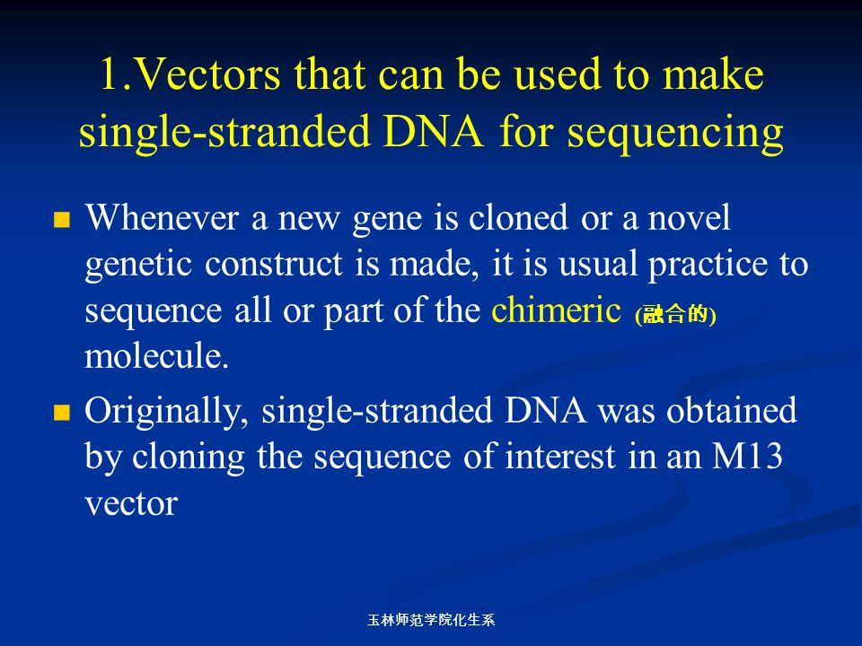 玉林师范学院化生系 1.Vectors that can be used to make single-stranded DNA for sequencing Whenever a new gene is cloned or a novel genetic construct is made, it