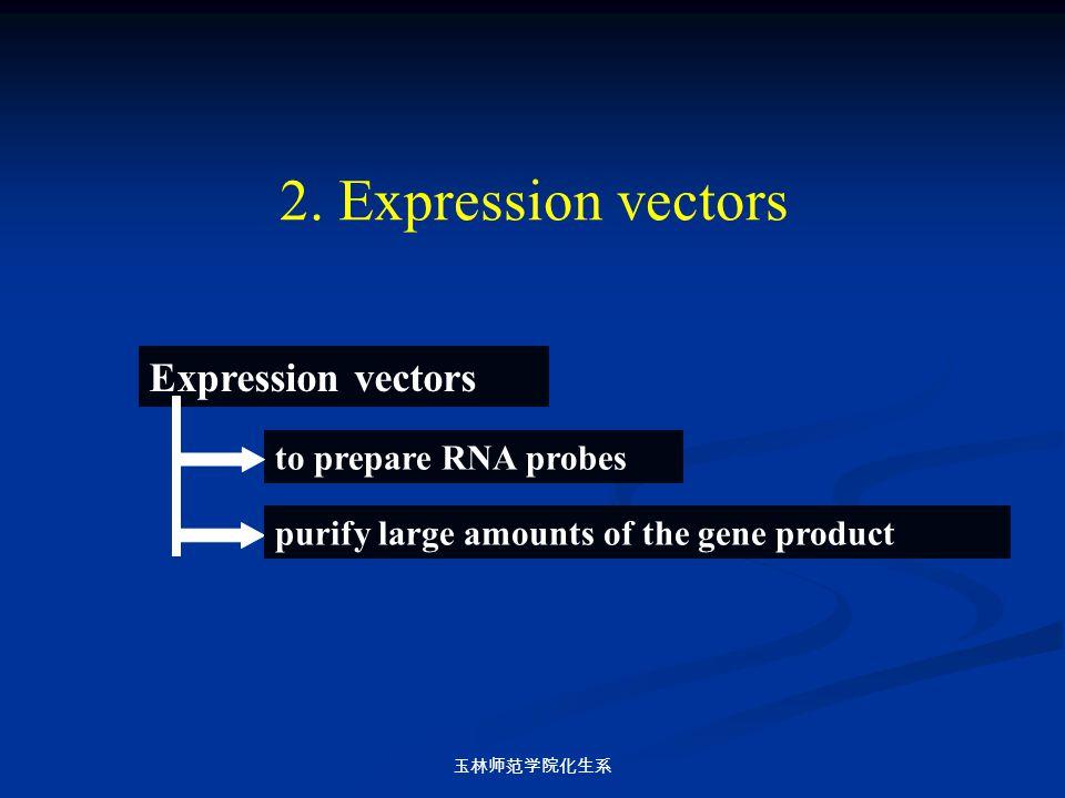 玉林师范学院化生系 Expression vectors to prepare RNA probes purify large amounts of the gene product 2. Expression vectors