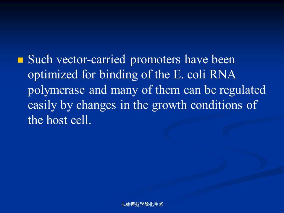 玉林师范学院化生系 Such vector-carried promoters have been optimized for binding of the E. coli RNA polymerase and many of them can be regulated easily by chan