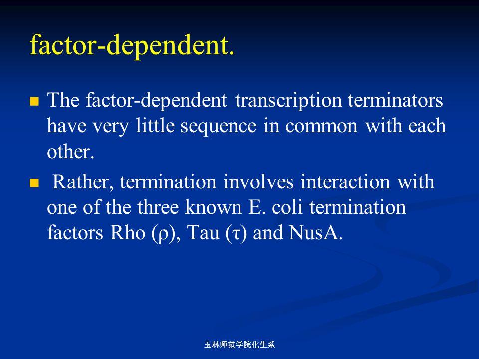 玉林师范学院化生系 factor-dependent. The factor-dependent transcription terminators have very little sequence in common with each other. Rather, termination in