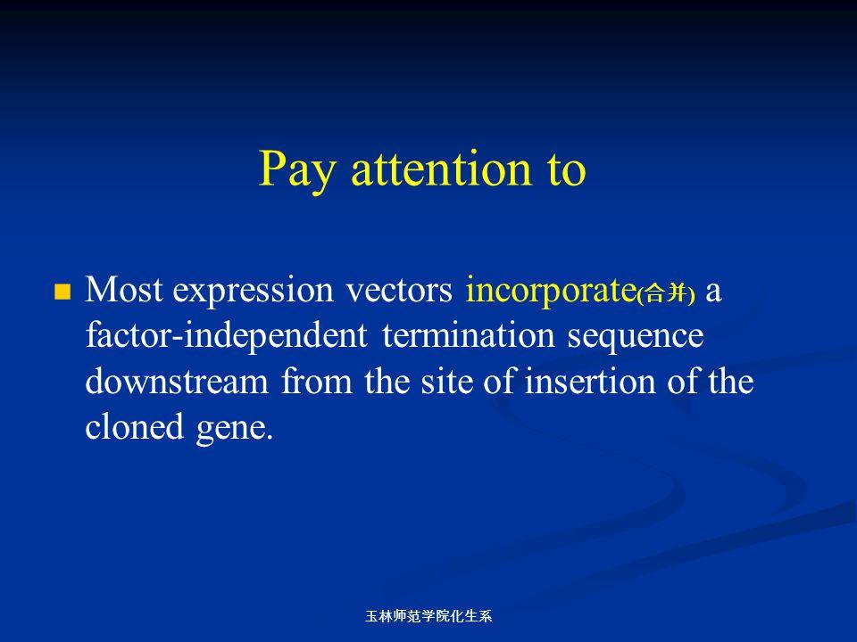 玉林师范学院化生系 Pay attention to Most expression vectors incorporate ( 合并 ) a factor-independent termination sequence downstream from the site of insertion