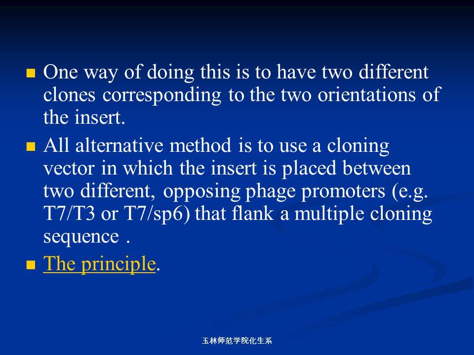 玉林师范学院化生系 One way of doing this is to have two different clones corresponding to the two orientations of the insert. All alternative method is to use