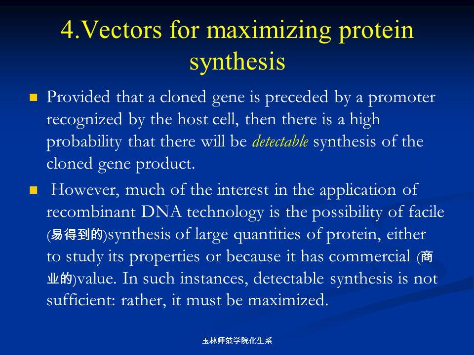 玉林师范学院化生系 4.Vectors for maximizing protein synthesis Provided that a cloned gene is preceded by a promoter recognized by the host cell, then there is