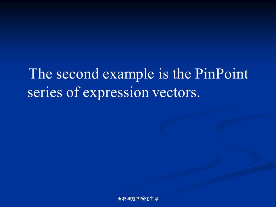 玉林师范学院化生系 The second example is the PinPoint series of expression vectors.
