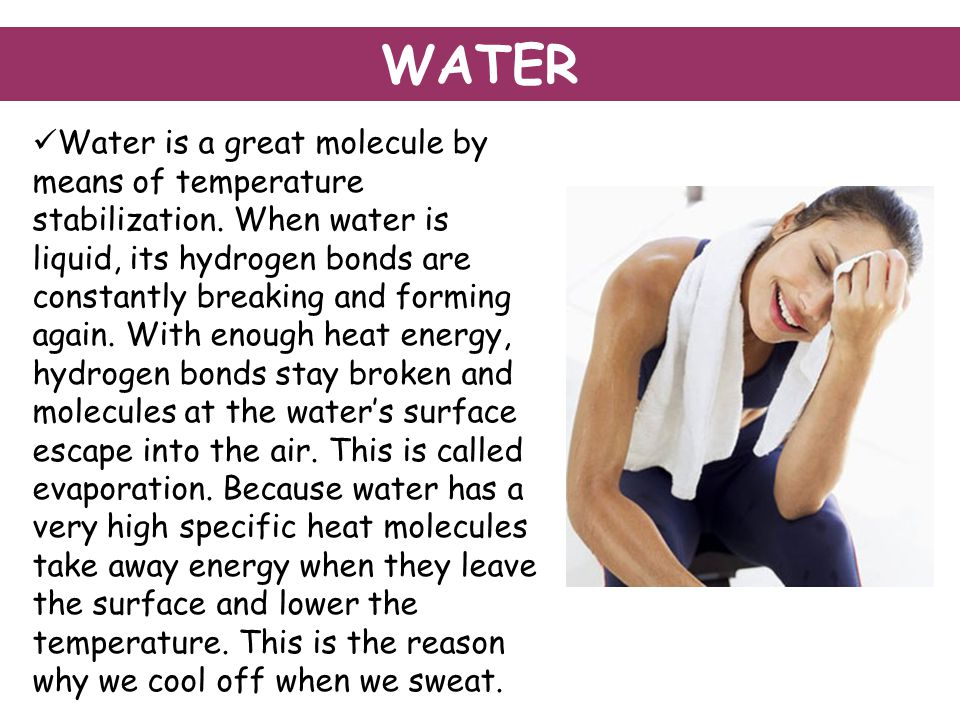 Water is a great molecule by means of temperature stabilization.