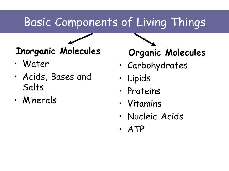 Basic Components of Living Things Inorganic Molecules Water Acids, Bases and Salts Minerals Organic Molecules Carbohydrates Lipids Proteins Vitamins Nucleic Acids ATP