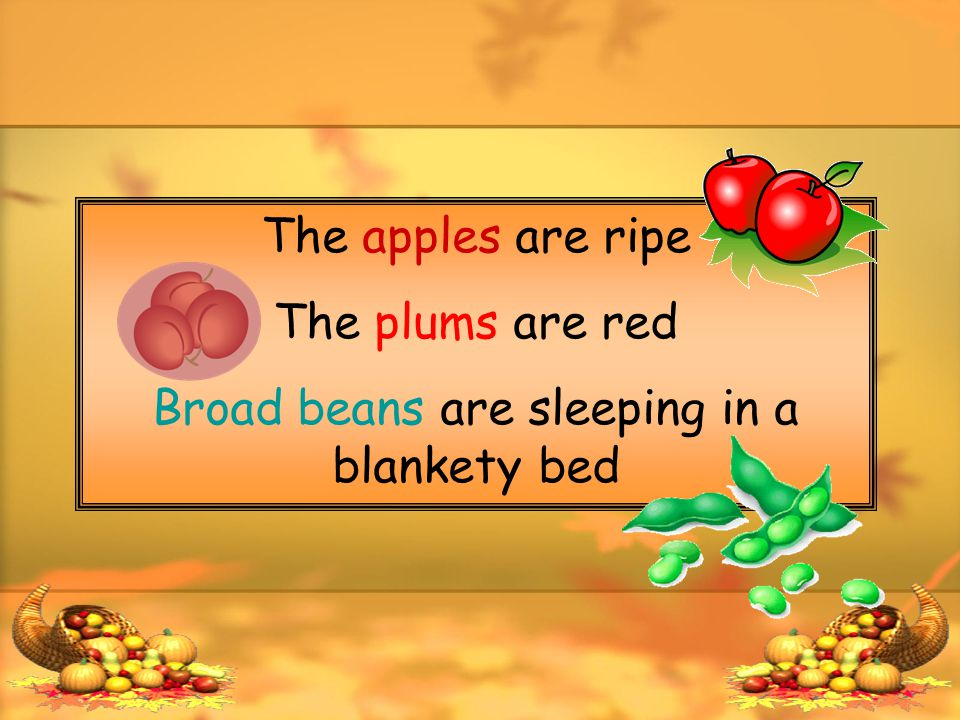The apples are ripe The plums are red Broad beans are sleeping in a blankety bed