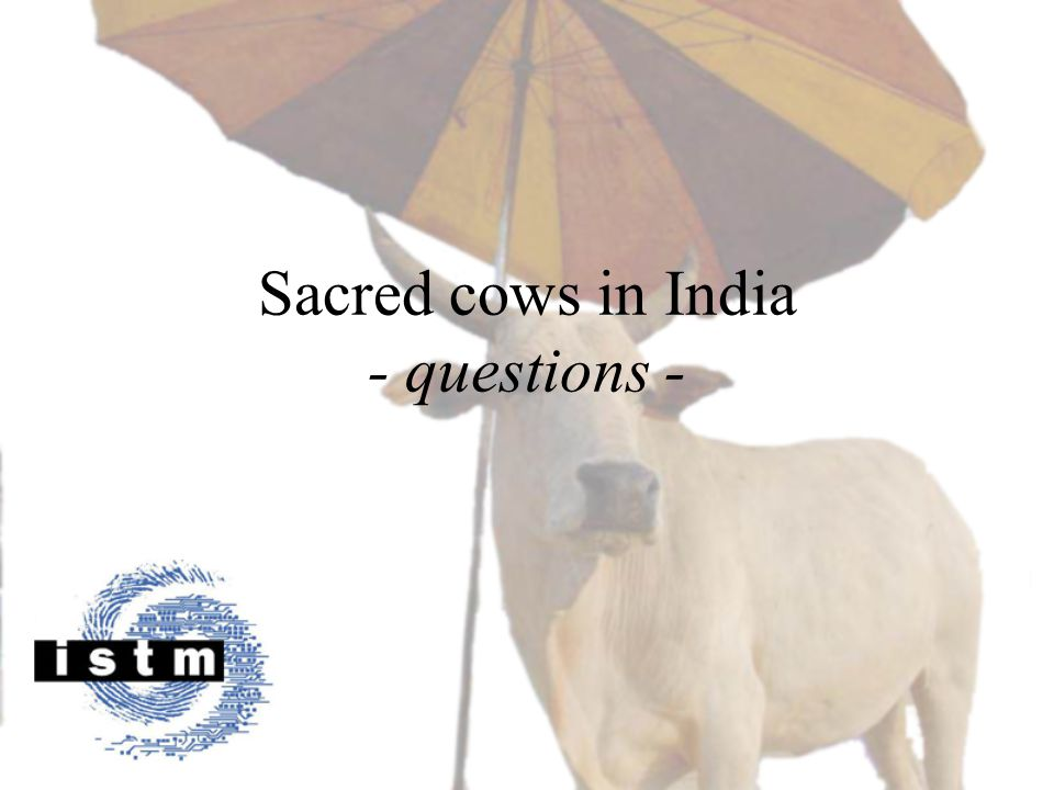 Sacred cows in India - questions -