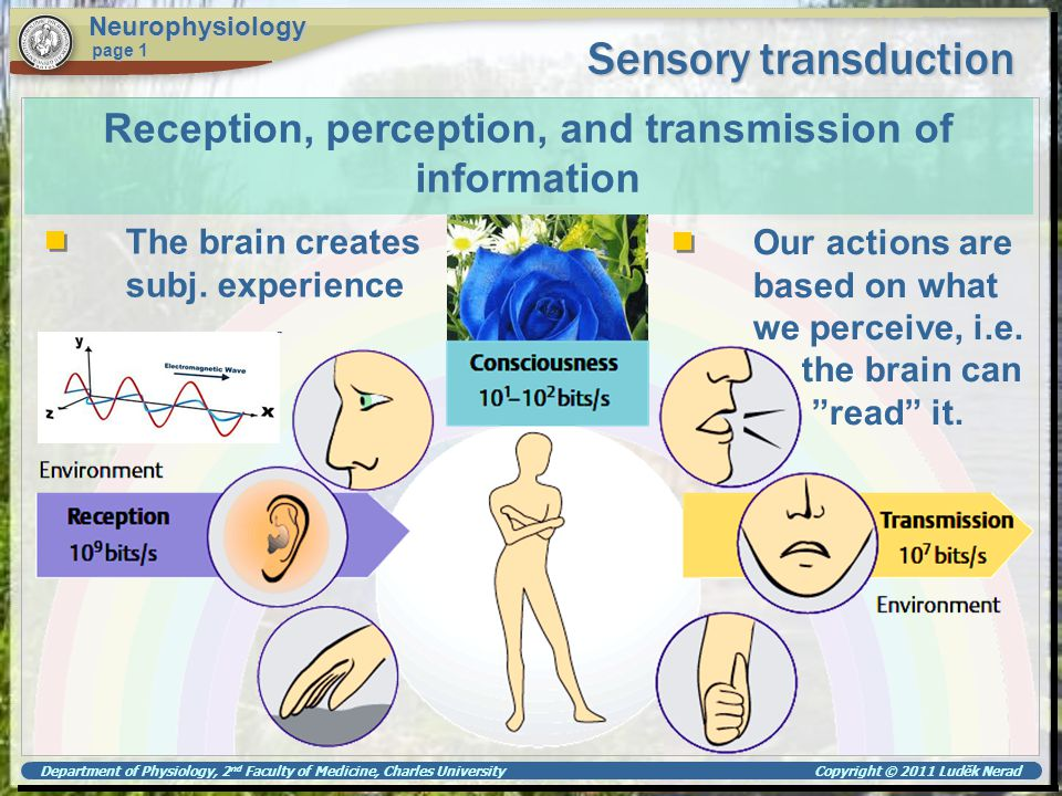 Department of Physiology, 2 nd Faculty of Medicine, Charles University Copyright © 2011 Luděk Nerad Sensory transduction Neurophysiology page 1..