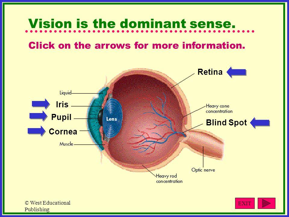 © West Educational Publishing Vision is the dominant sense.