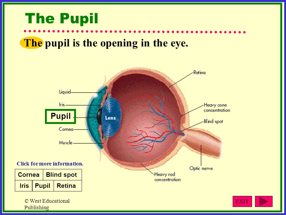 © West Educational Publishing The Pupil The pupil is the opening in the eye.