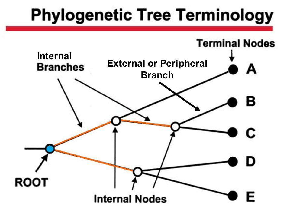 12 Internal External or Peripheral Branch