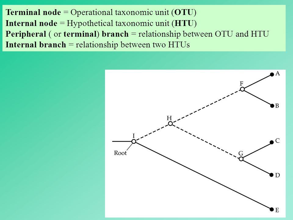 17 Terminal node = Operational taxonomic unit (OTU) Internal node = Hypothetical taxonomic unit (HTU) Peripheral ( or terminal) branch = relationship
