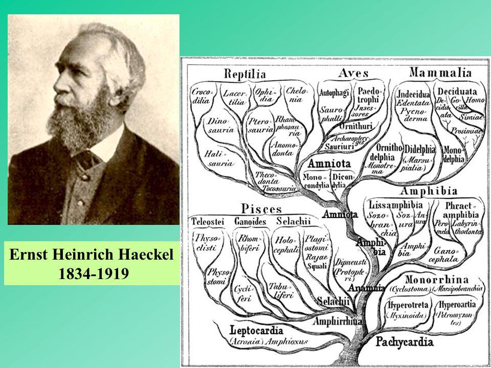 3 Ernst Heinrich Haeckel 1834-1919