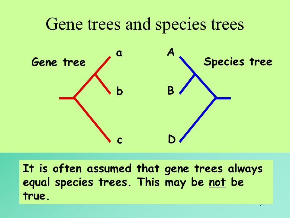 57 Gene trees and species trees It is often assumed that gene trees always equal species trees. This may be not be true. a b c A B D Gene tree Species