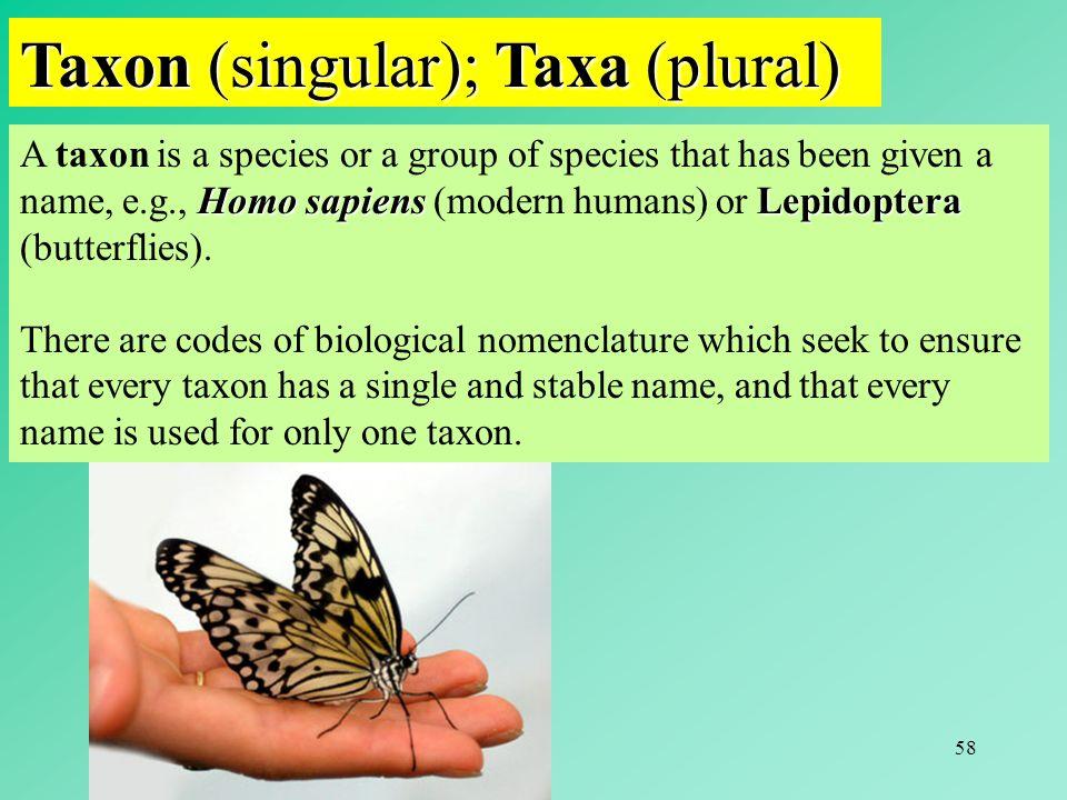 58 Taxon (singular); Taxa (plural) Homo sapiensLepidoptera A taxon is a species or a group of species that has been given a name, e.g., Homo sapiens (