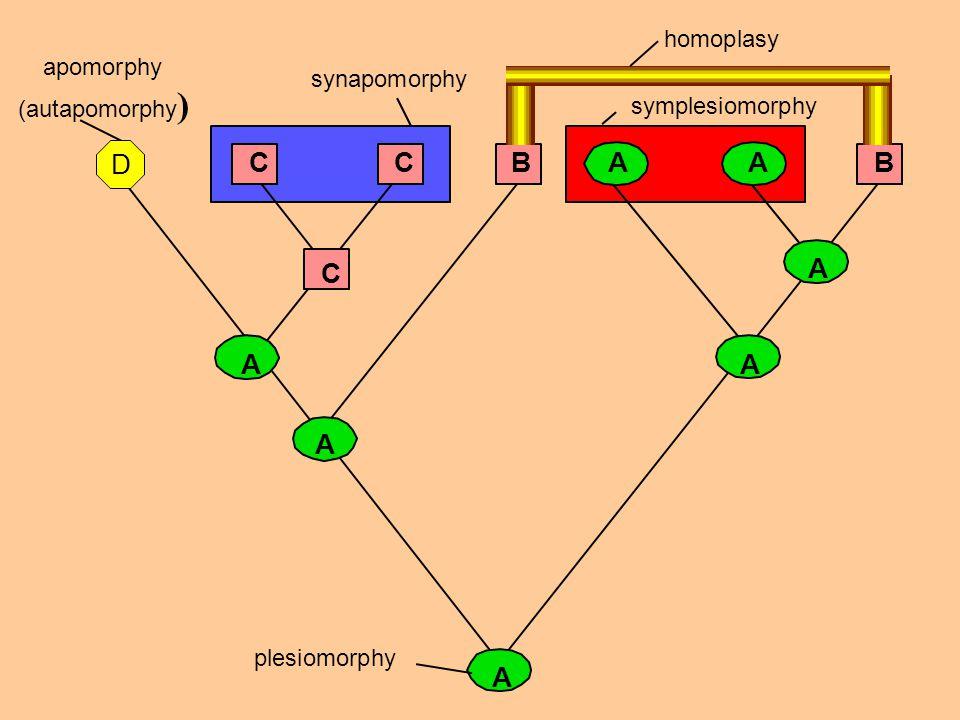 84 CC C A A A BAA A B plesiomorphy apomorphy (autapomorphy ) synapomorphy symplesiomorphy homoplasy A D