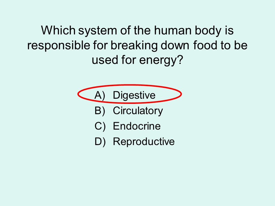 Which system of the human body is responsible for breaking down food to be used for energy? A)Digestive B)Circulatory C)Endocrine D)Reproductive