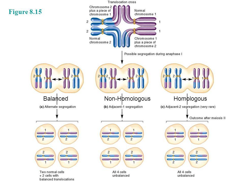 Figure 8.15 BalancedNon-HomologousHomologous