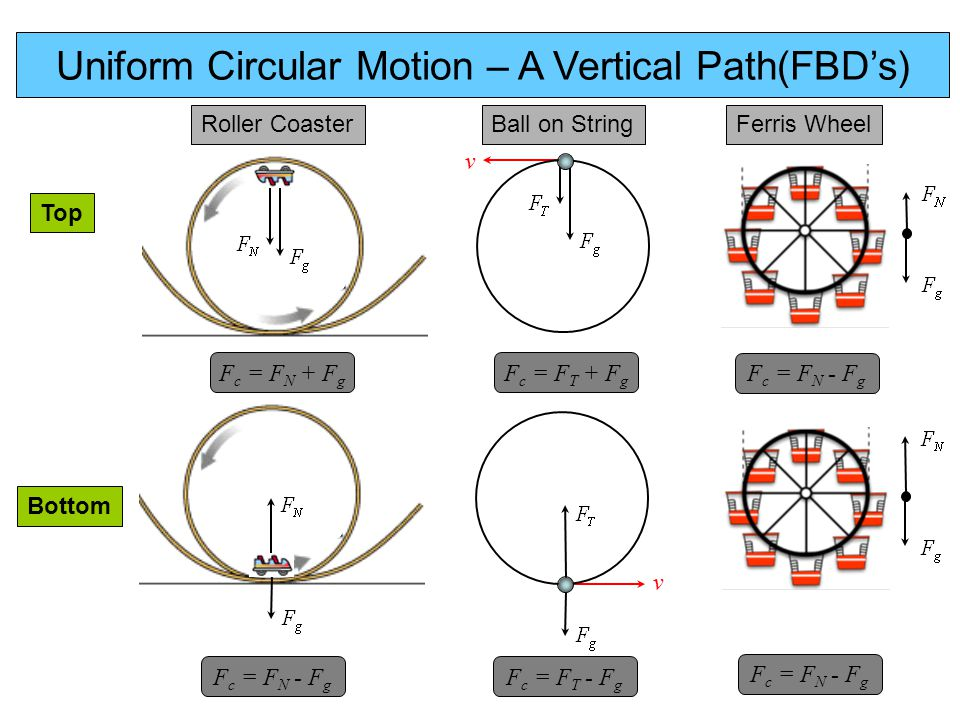 Uniform Circular Motion – A Vertical Path(FBD's) Roller CoasterFerris WheelBall on String v v F c = F T + F g F c = F T - F g F c = F N - F g F c = F N + F g Top Bottom F c = F N - F g