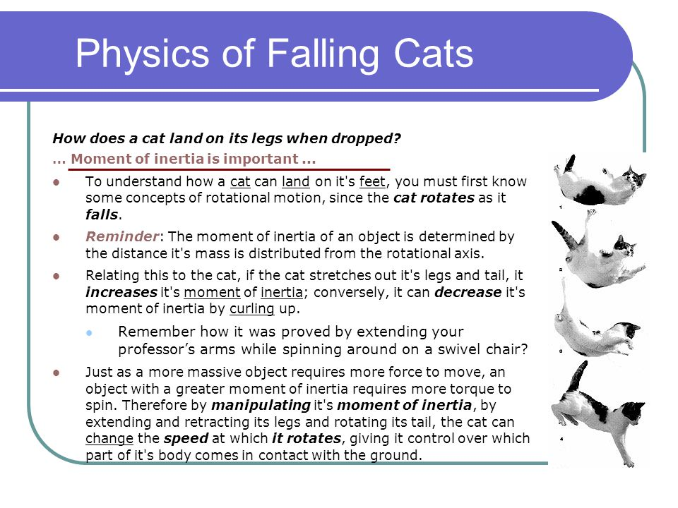 Physics of Falling Cats How does a cat land on its legs when dropped? … Moment of inertia is important... To understand how a cat can land on it's fee