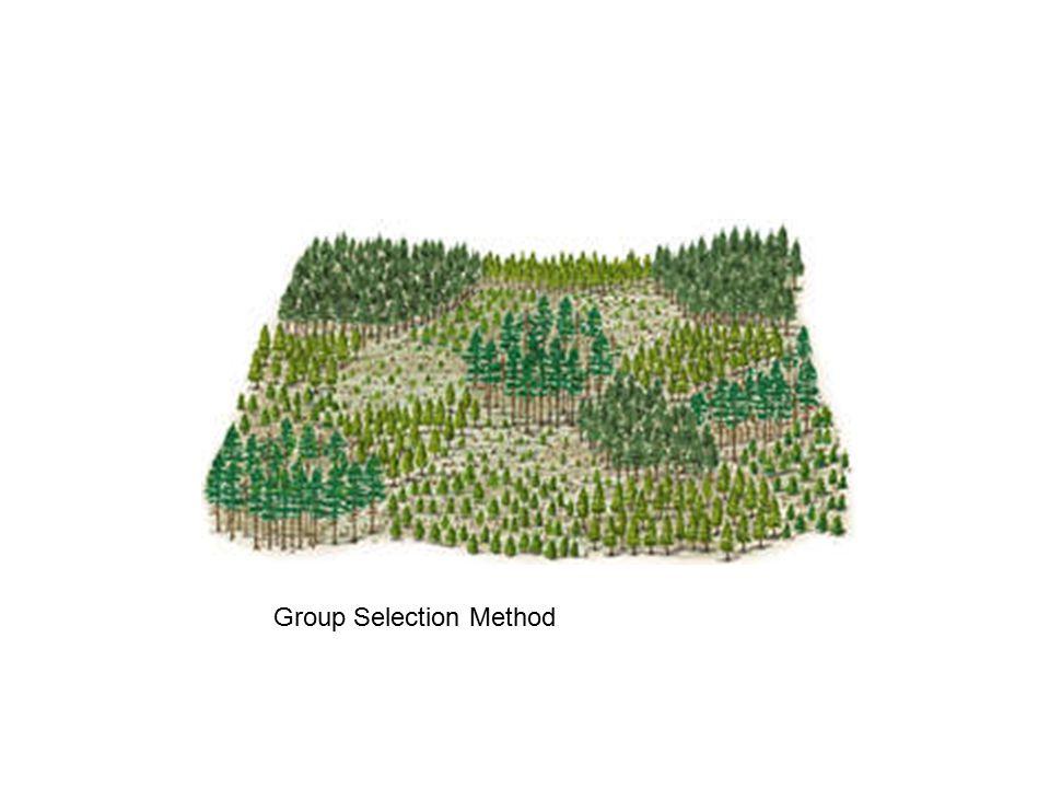 Group Selection Method